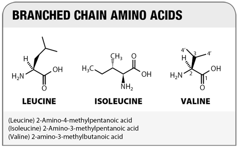 Supplement Focus: Amino Acids